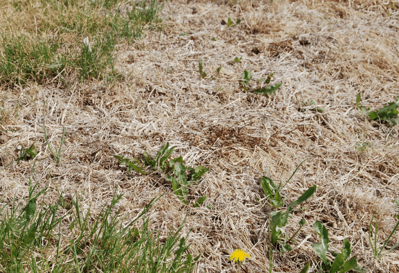 How To Get Rid Of Lawn Mites